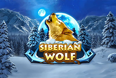 Siberian Wolf Slot Machine: Play Online and Review