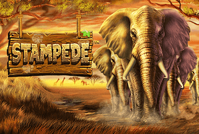 Stampede Slot Machine: Play Online and Review
